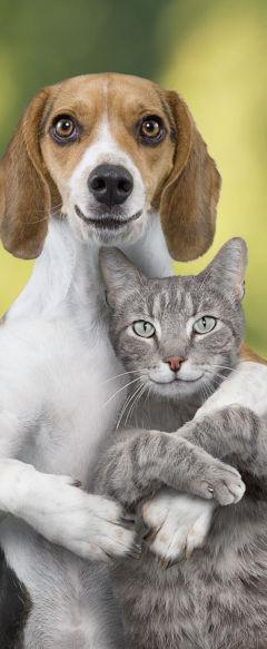 Comida y complementos para perros y gatos en Muchaspatas.com